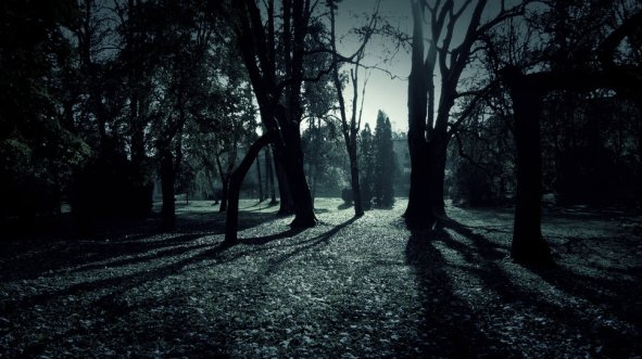 312489__dark-forest-shadows-l-ho-eoruthui_p