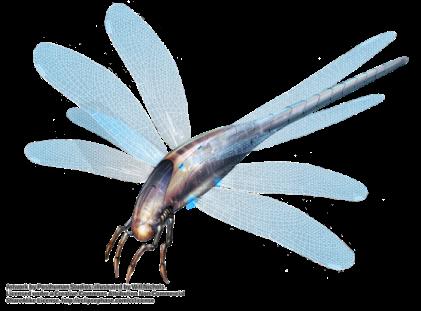DragonflyMorph_WillNichols leirthcoi5 uy.png