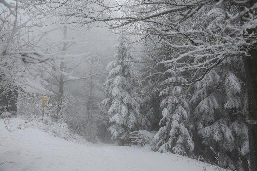 winter-4698763_1920.jpg